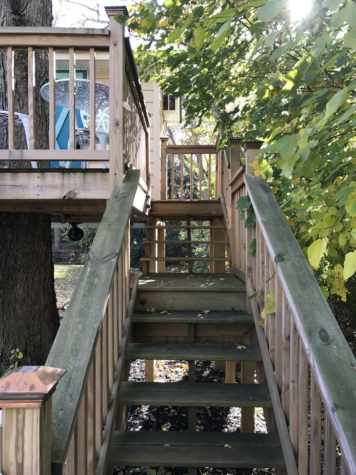 The stairs leading to the treehouse